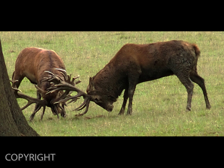 WHO'S BOSS by Clive Williams.jpg