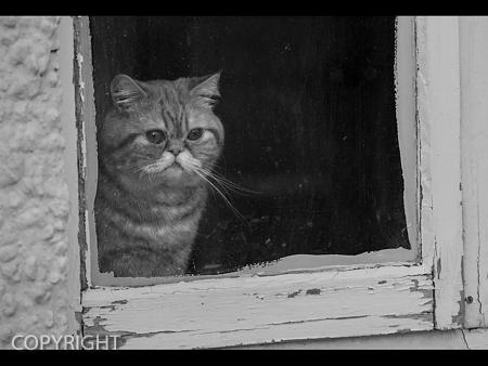 CATTIDUDE by Emily Cosby.jpg