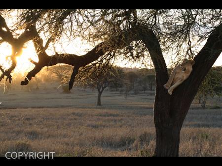 SUNDOWNER by Allen Cosby.jpg