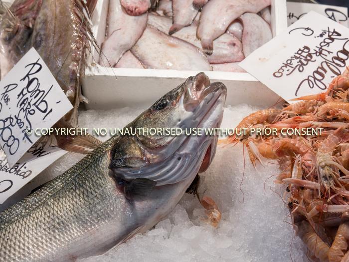 SEA FOOD by geoff einon-2.jpg