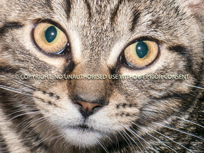 CATS EYES by David Phillips.jpg