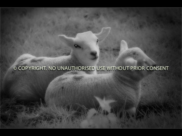 ALIEN SHEEP - Jamie White - 14