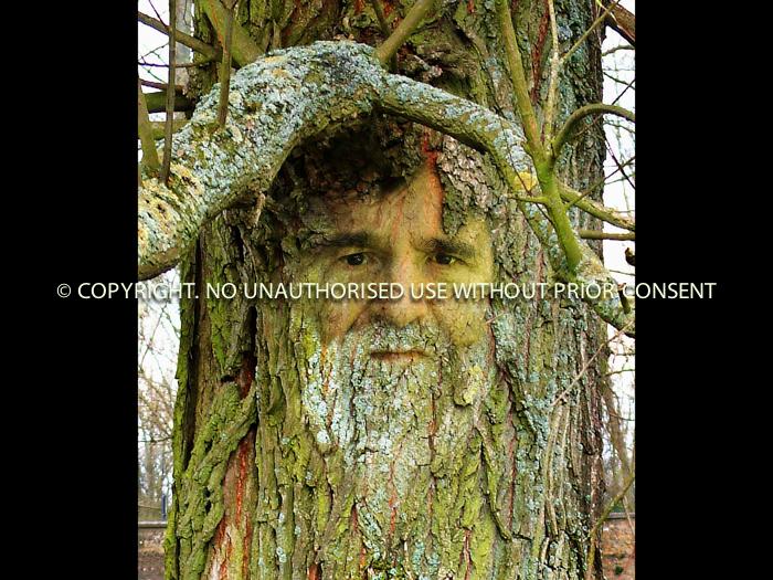 THE GREEN MAN - Bruce Williams - 16