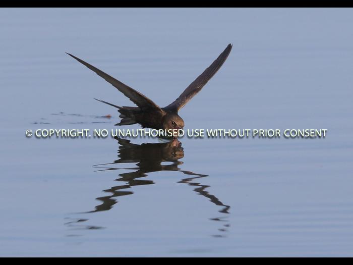 SWIFT HALF by Neil Schofield