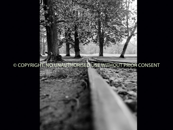 ON TRACK by David Phillips.jpg