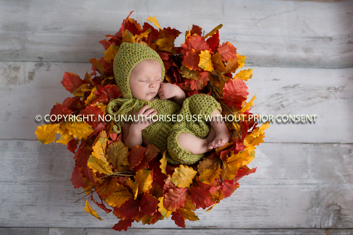 AUTUMNS ARRIVED by Tracy Simpson.jpg