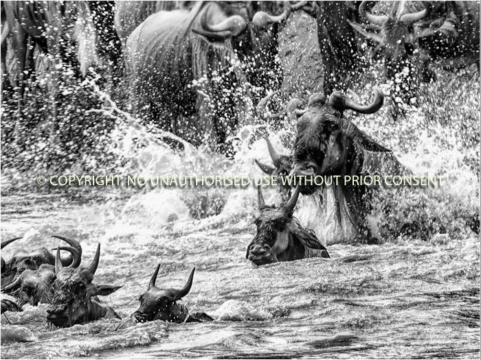 RIVER CROSSING by Geoff Einon.jpg