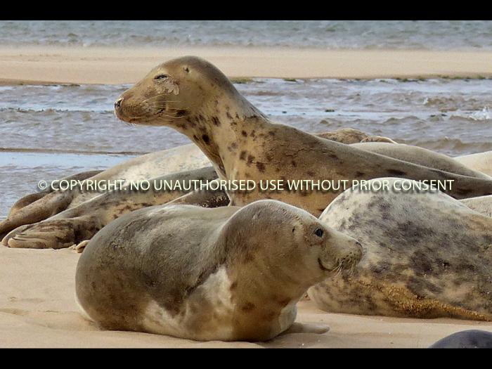 SEALS by Irene Clarke.jpg
