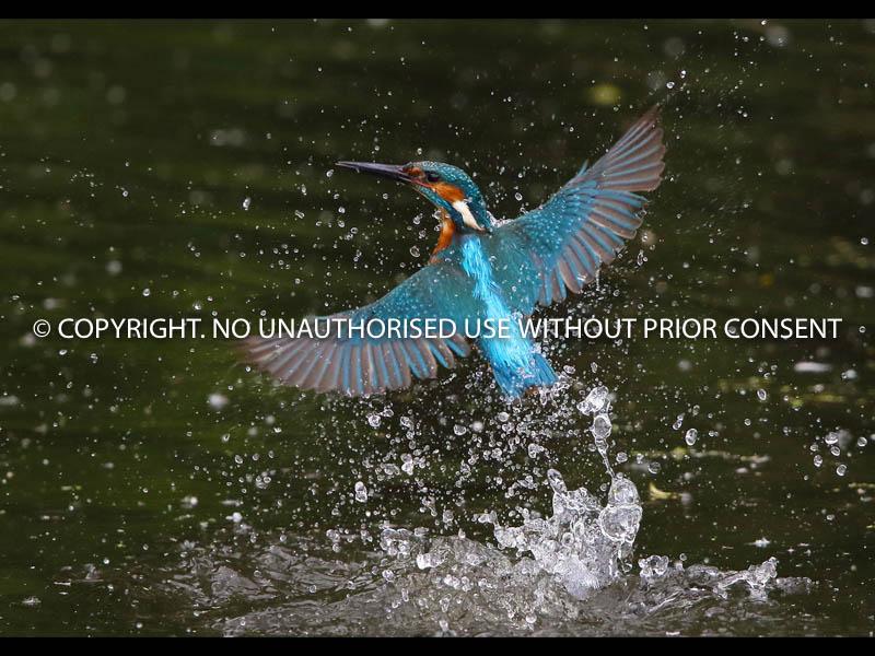 BATH EXIT by Neil Schofield.jpg