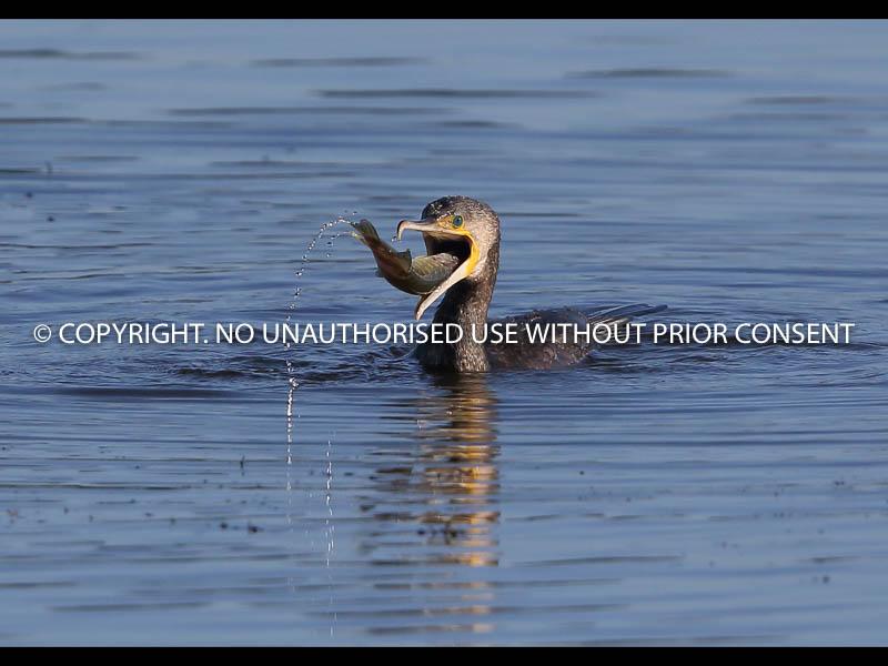 DOWN THE HATCH by Neil Schofield.jpg