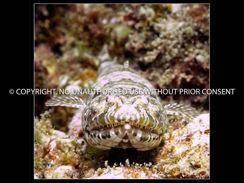 LIZARD FISH by Mark Jones.jpg