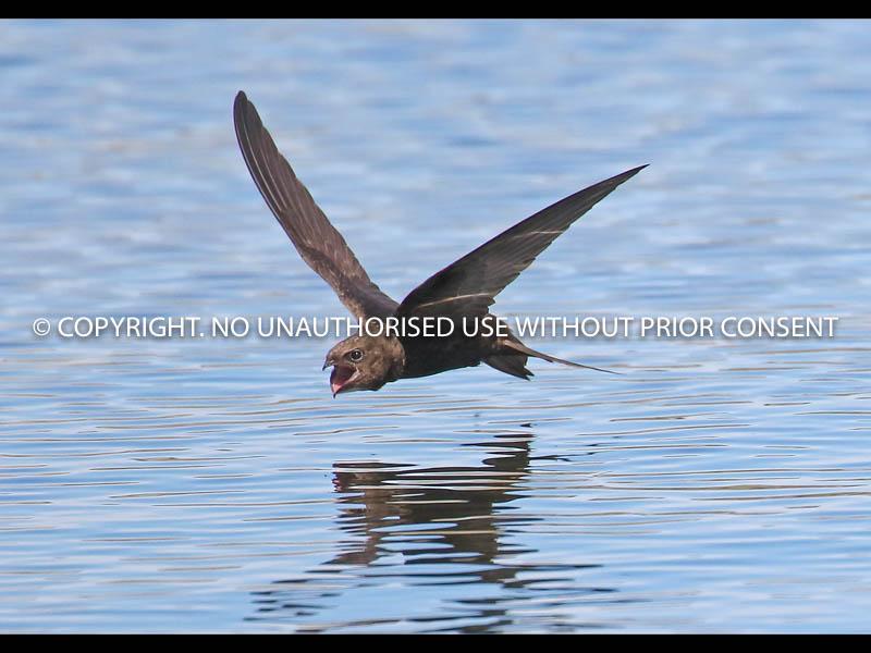SWIFT PASS by Neil Schofield.jpg