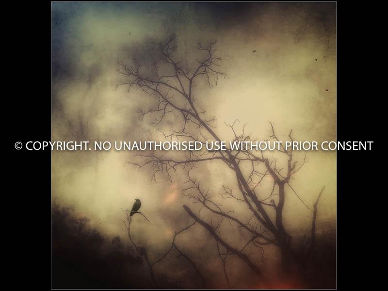 INHERIT THE NIGHT by Tanya Hames.jpg