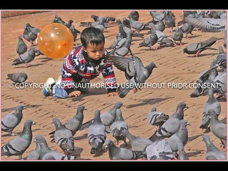 PIGEON CHASING by Irene  Clarke.jpg
