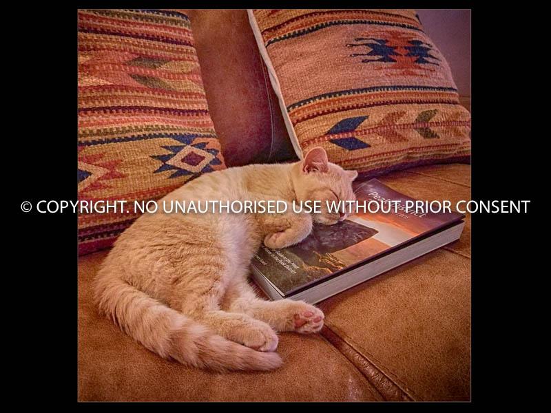 BORING READ by Mark Jones.jpg