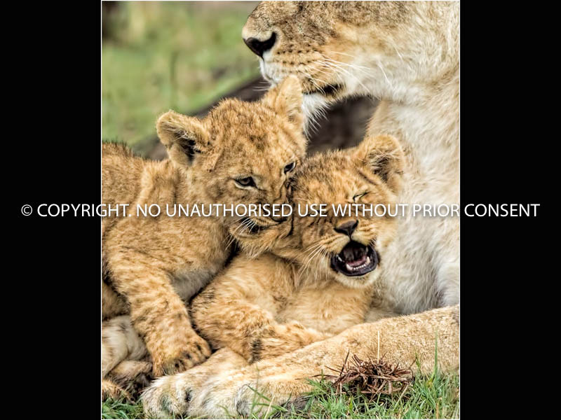 BROTHERLY LOVE by geoff einon.jpg