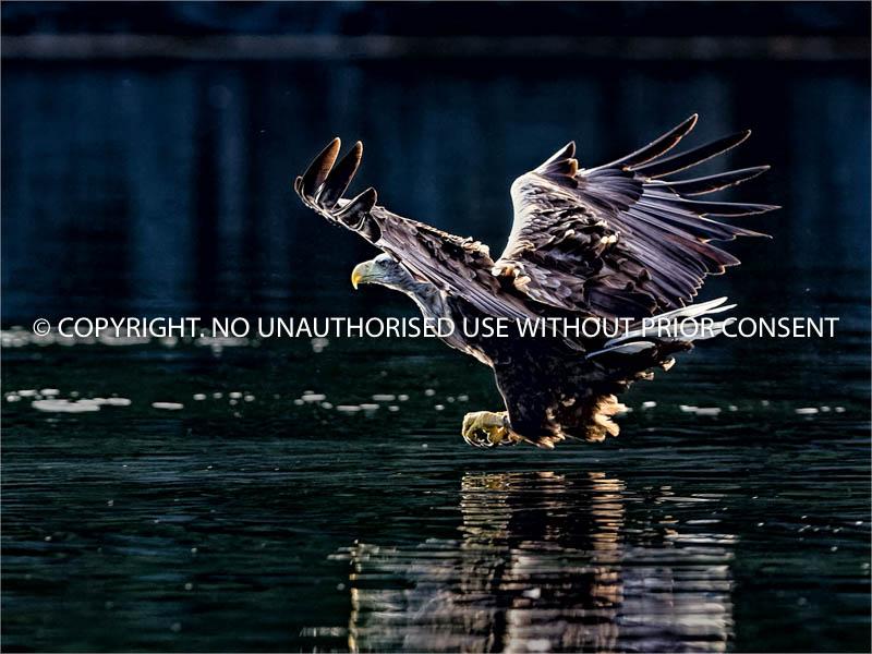 FLY-BY by geoff einon.jpg