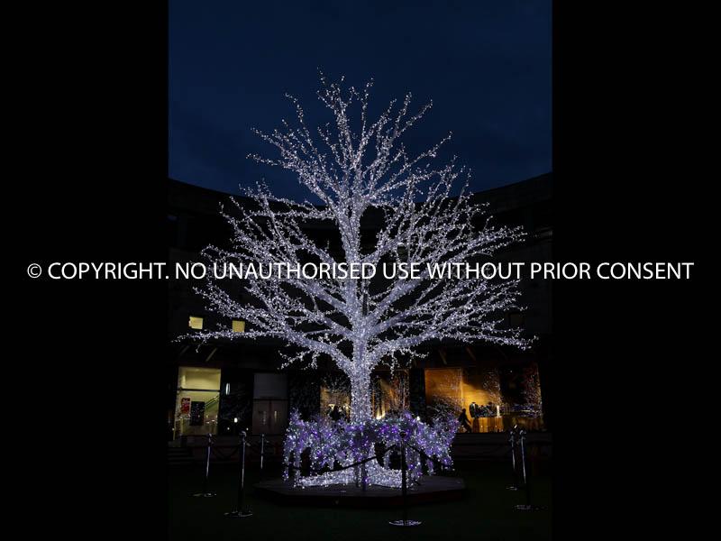 BARE TREE by Neil Schofield.jpg