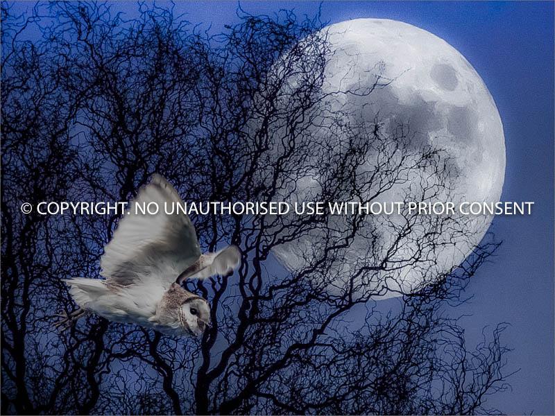 NIGHT STALKER by David Manning.jpg