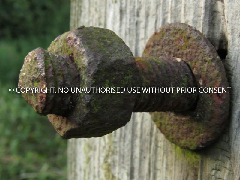 NOT USED FOR SOOOO LONG by Margaret Stewart.jpg