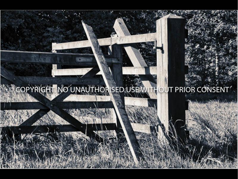 THE GATE NEEDS TLC by David Phillips.jpg