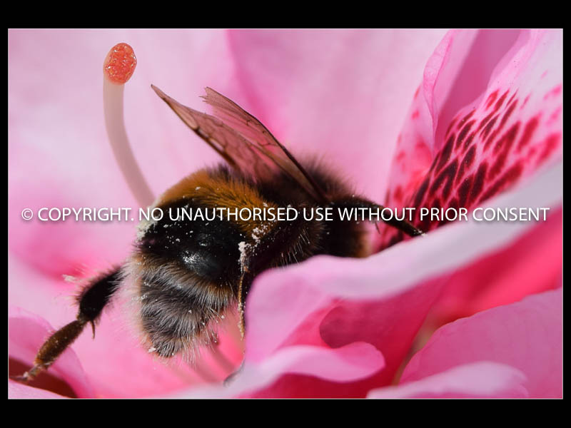 BREAKFAST BEE by Kim Woodhouse.jpg