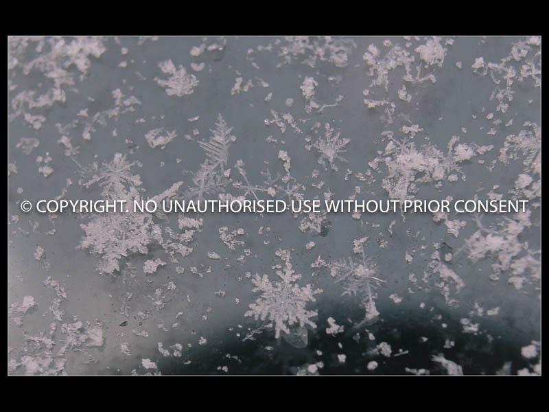 SNOWFLAKES by Kim Woodhouse.jpg