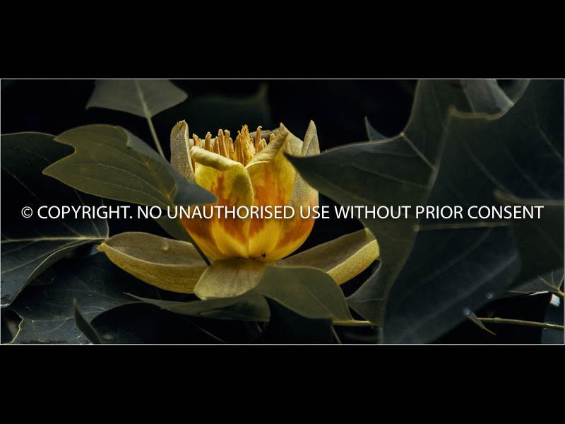 UNITLED II by Hugh Robinson.jpg