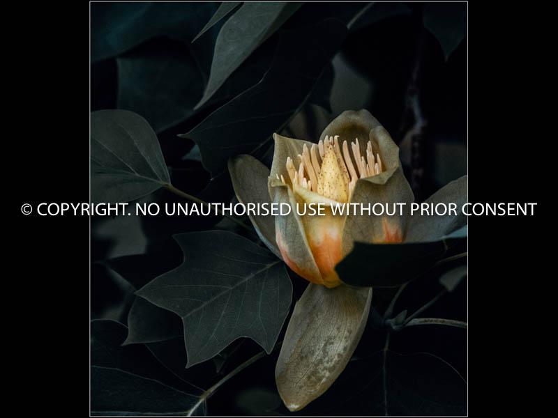 UNTITLED II by Hugh Robinson.jpg