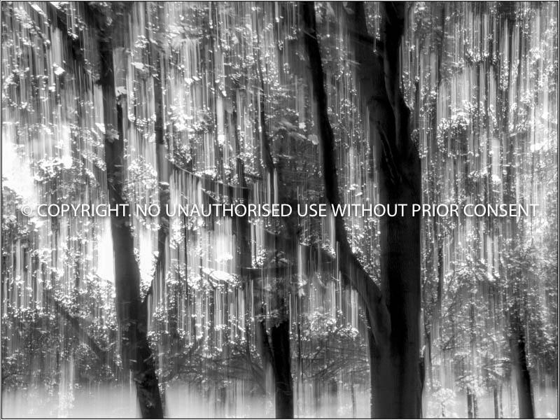 ENCHANTED WOODLAND by Christine Peel.jpg