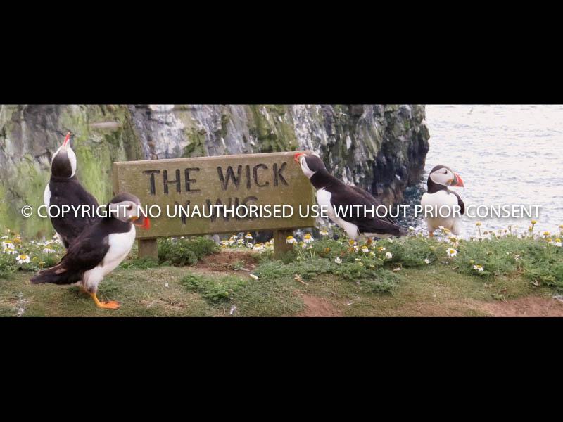 DOWN AT THE WICK by Jackie Adams.jpg