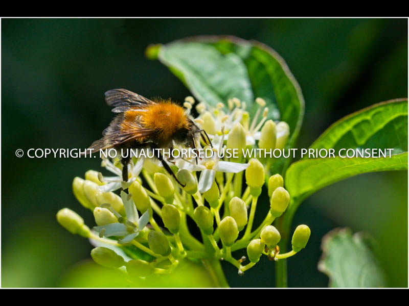 BEE ON A FLOWER by Brian Munday.jpg