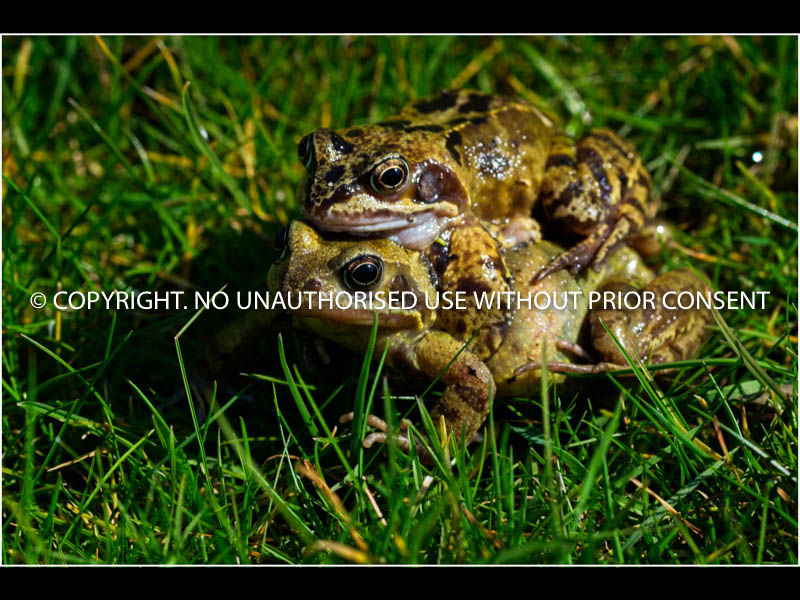 TOAD GIVING A PIGGYBACK by Brian Munday.jpg