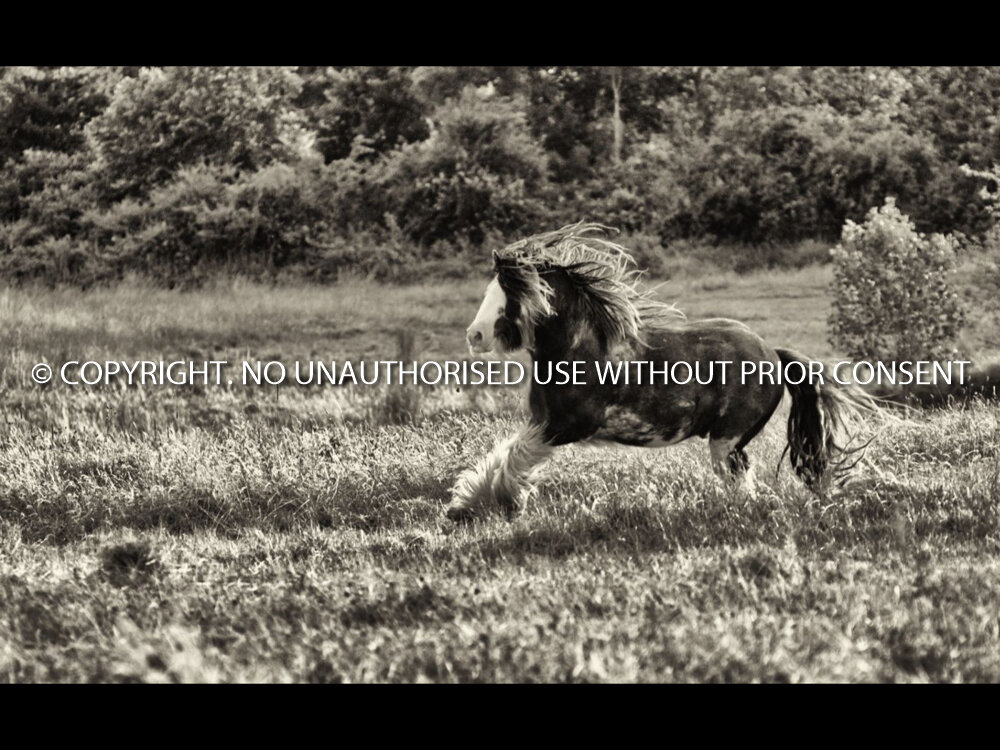 RUN FREE by David Phillips.jpg