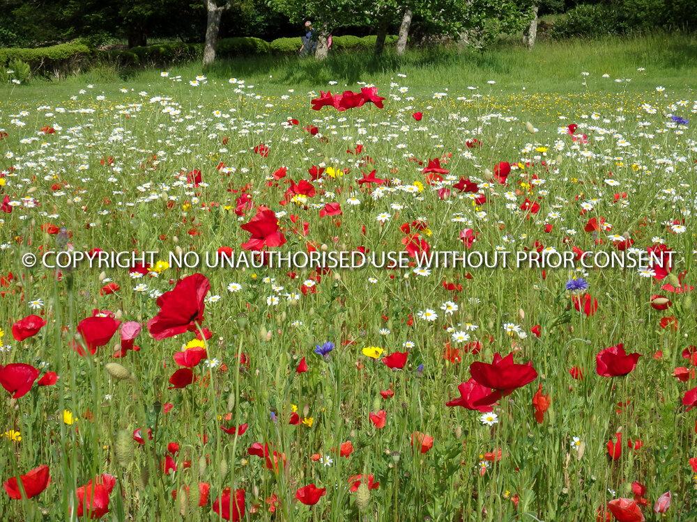 WILDFLOWER MEADOW by Angela McLean.jpg
