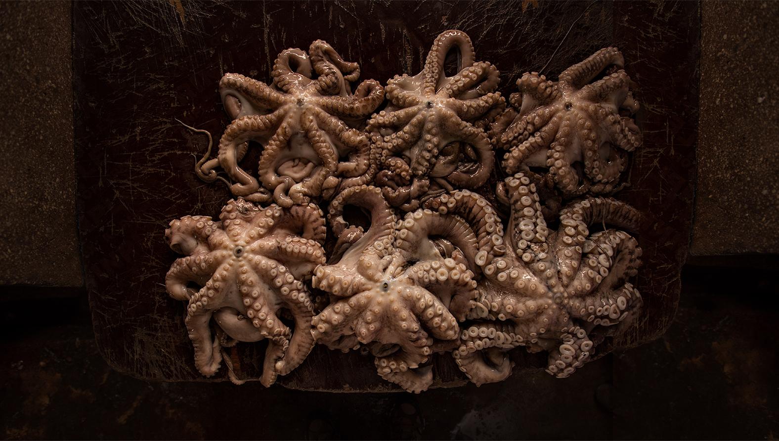 Octopus, street market,Zanzibar