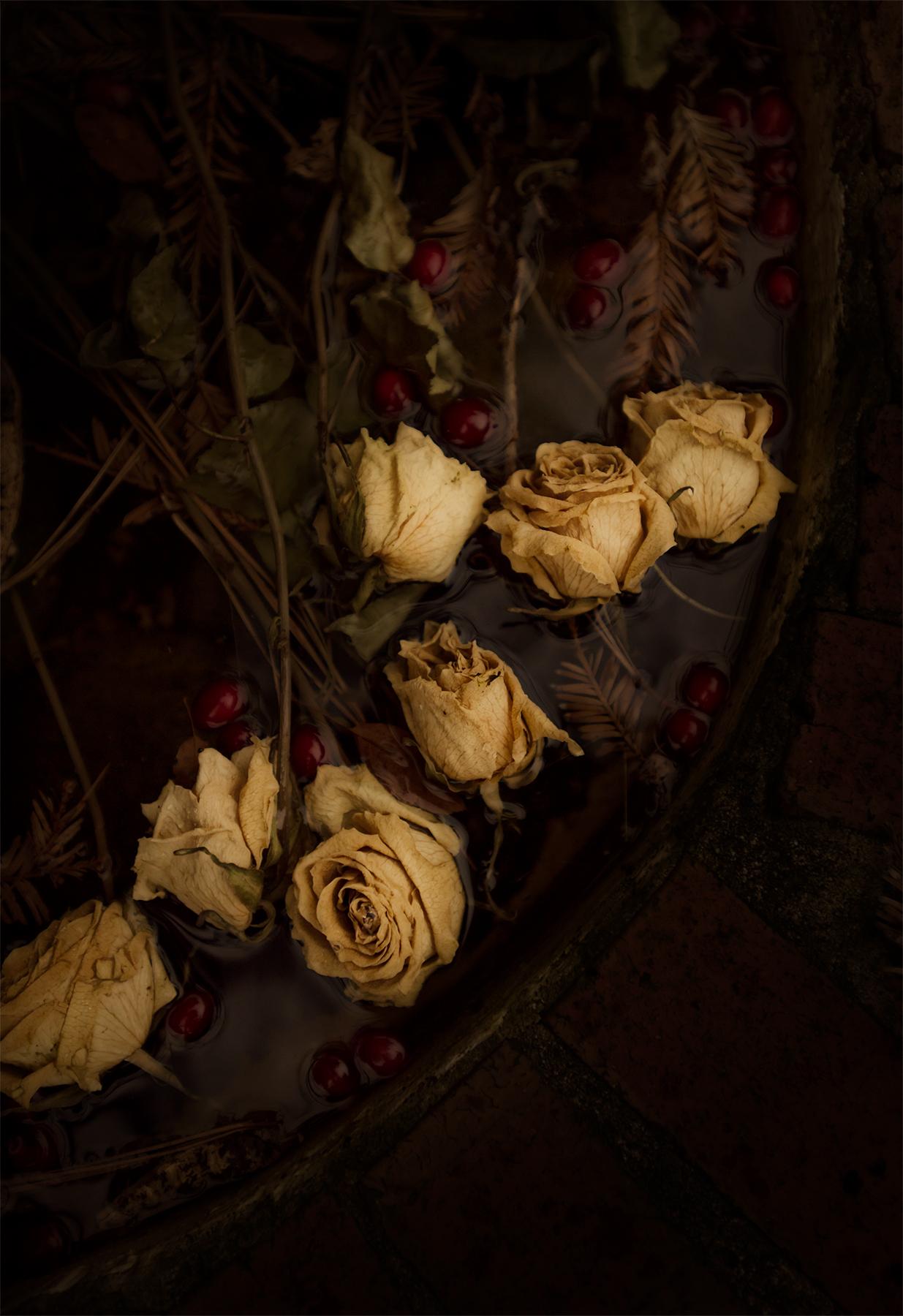 Roses and Cranberries in Bob's fountain, Virginia Beach, Va.