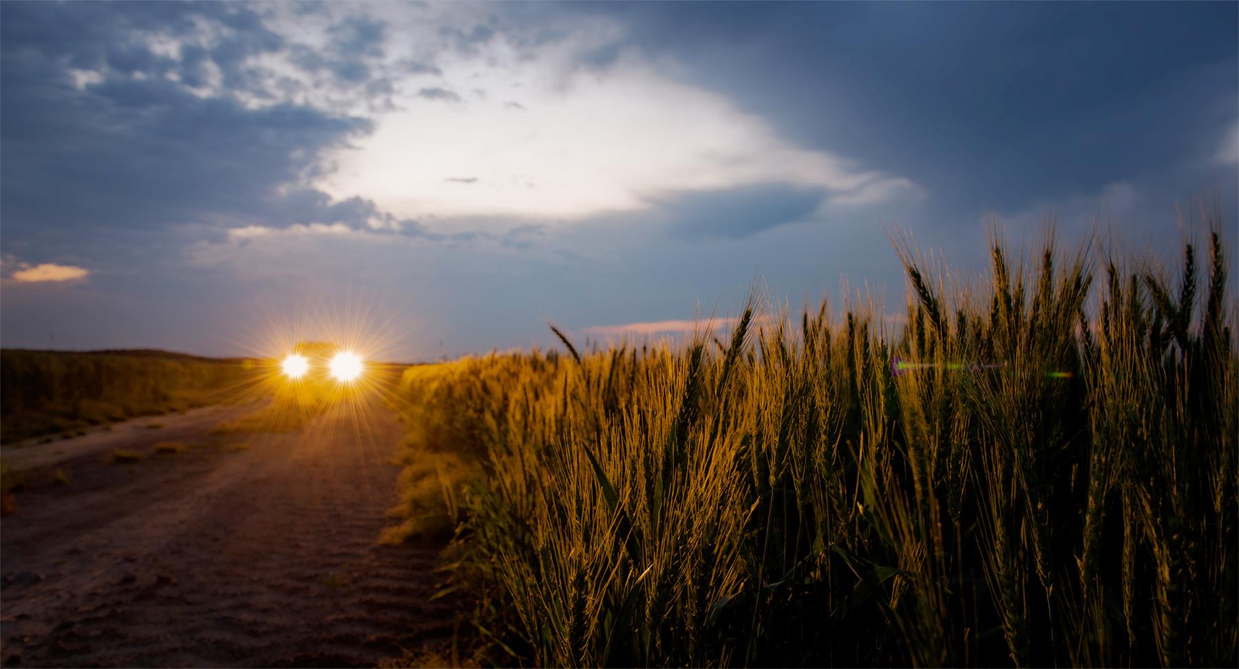 Farmland, eastern North Carolina.