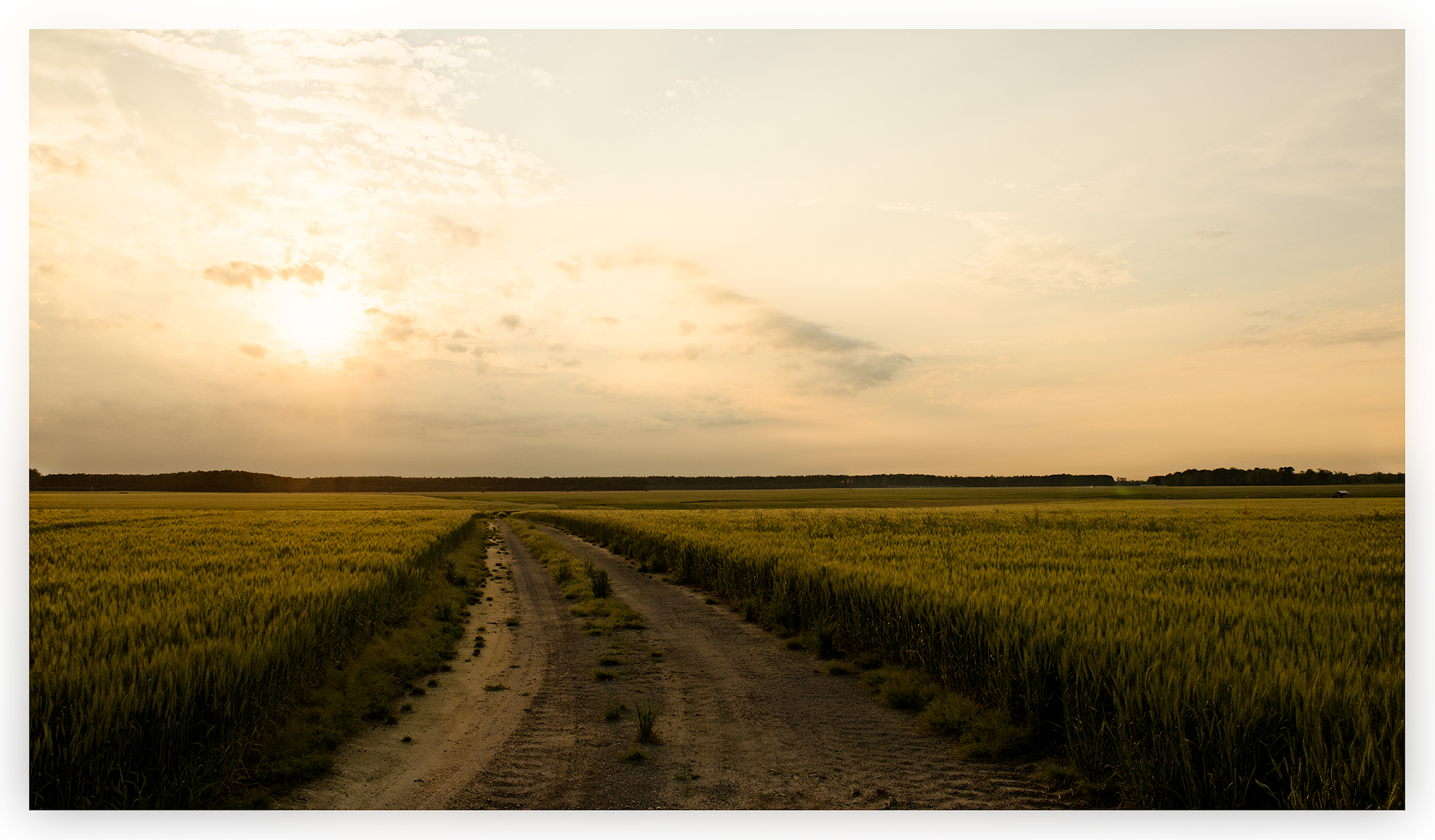 Dirt road, eastern North Carolina