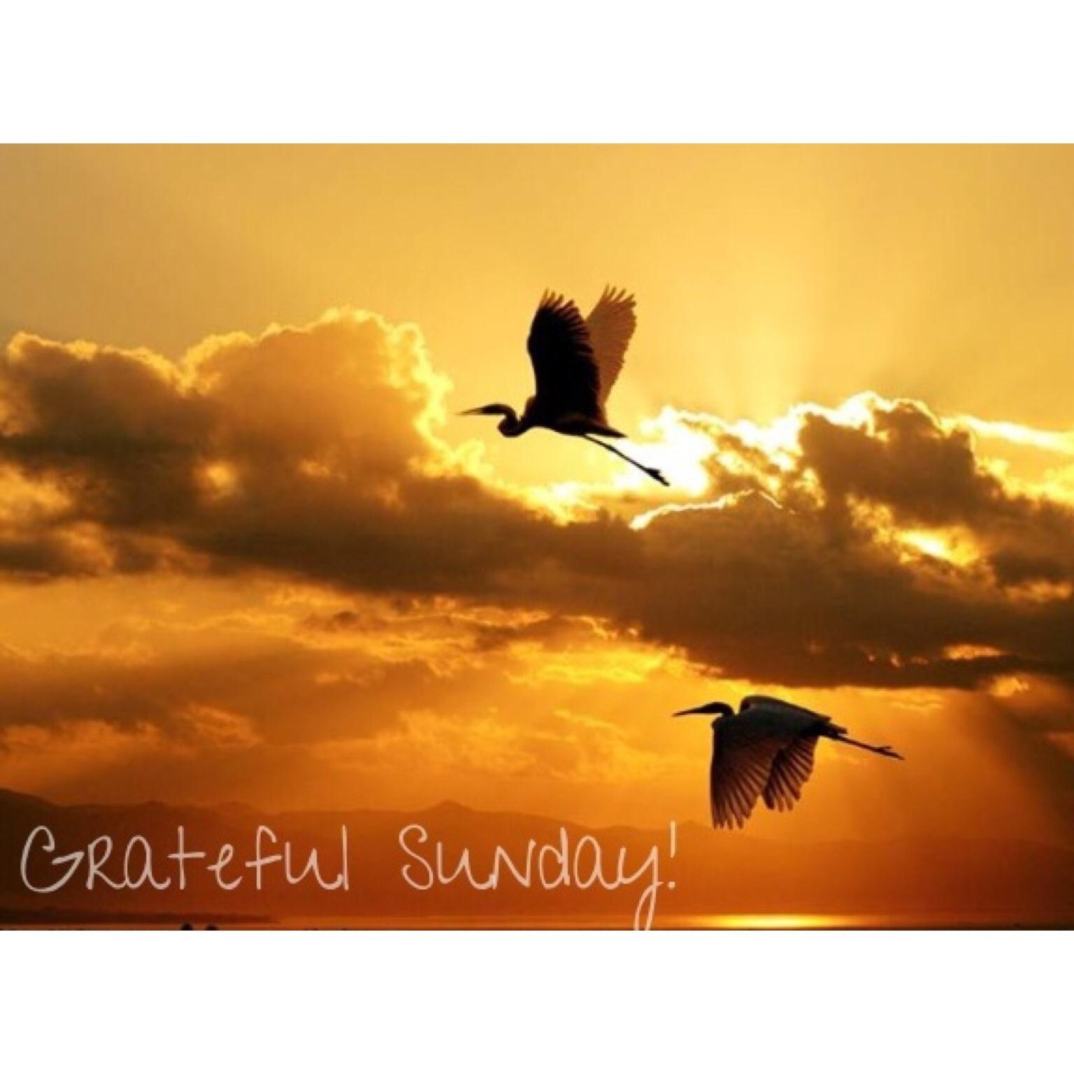 I am grateful for the birds!