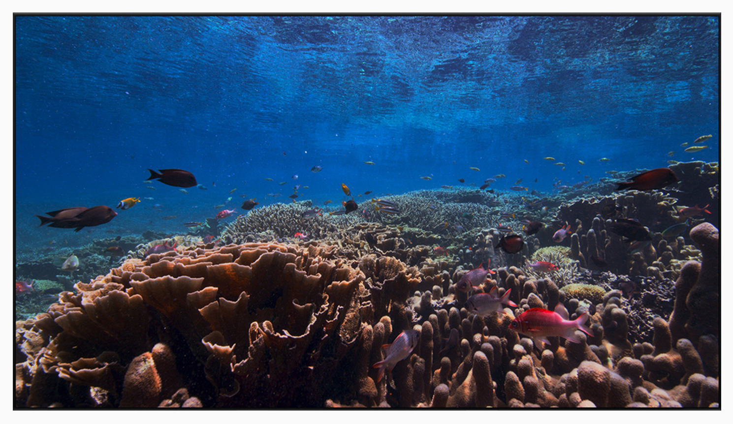 tvOS-13-fish.jpg