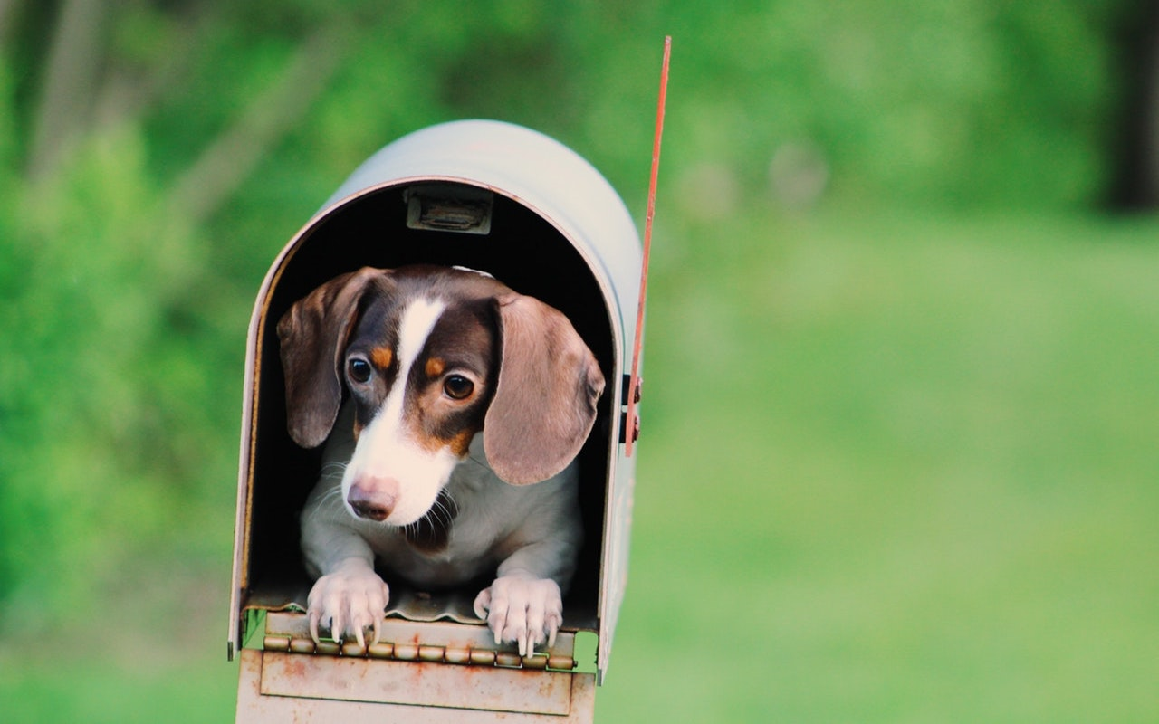 Mailbox-with-dog-photo.jpg