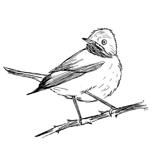 a little #warbler