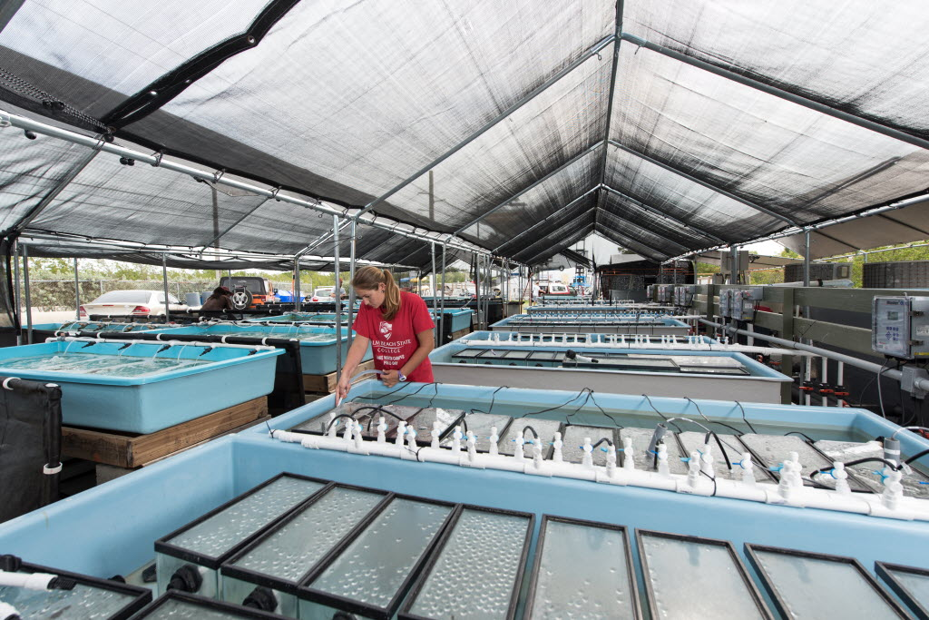Red fish are harvested about once every three months and plants about once a week.