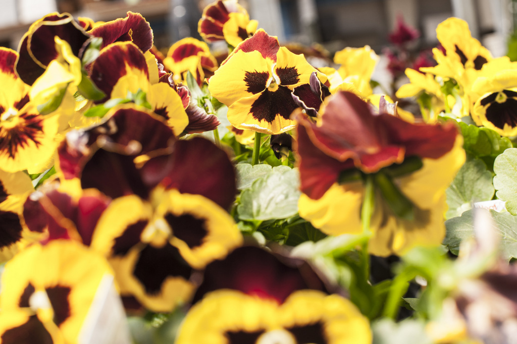 Flowers Lisa Landrie 4
