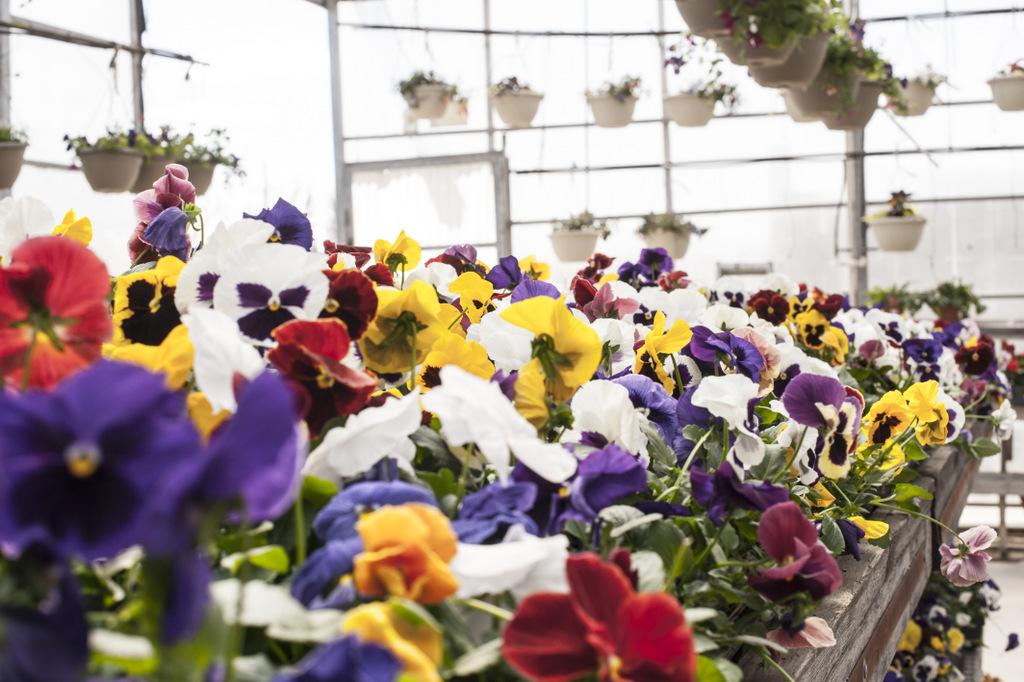 Flowers Lisa Landrie 5