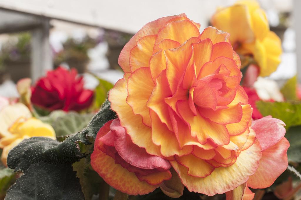 Flowers Lisa Landrie 8