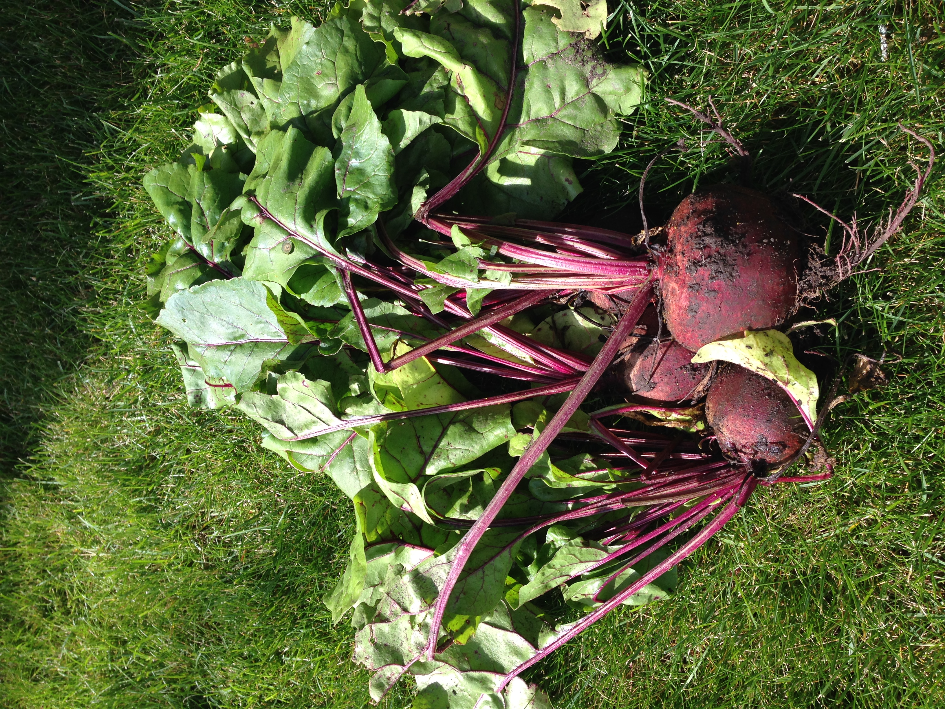 Beets: both the root vegetable and the greens are delicious and nutritious.