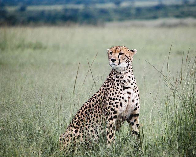 Every so often Aspkt gets the chance to dabble in a little wildlife photography. The Masai Mara has no shortage of beautiful creatures just waiting to model for you. Definitely worth a visit! (please take us back with you..)