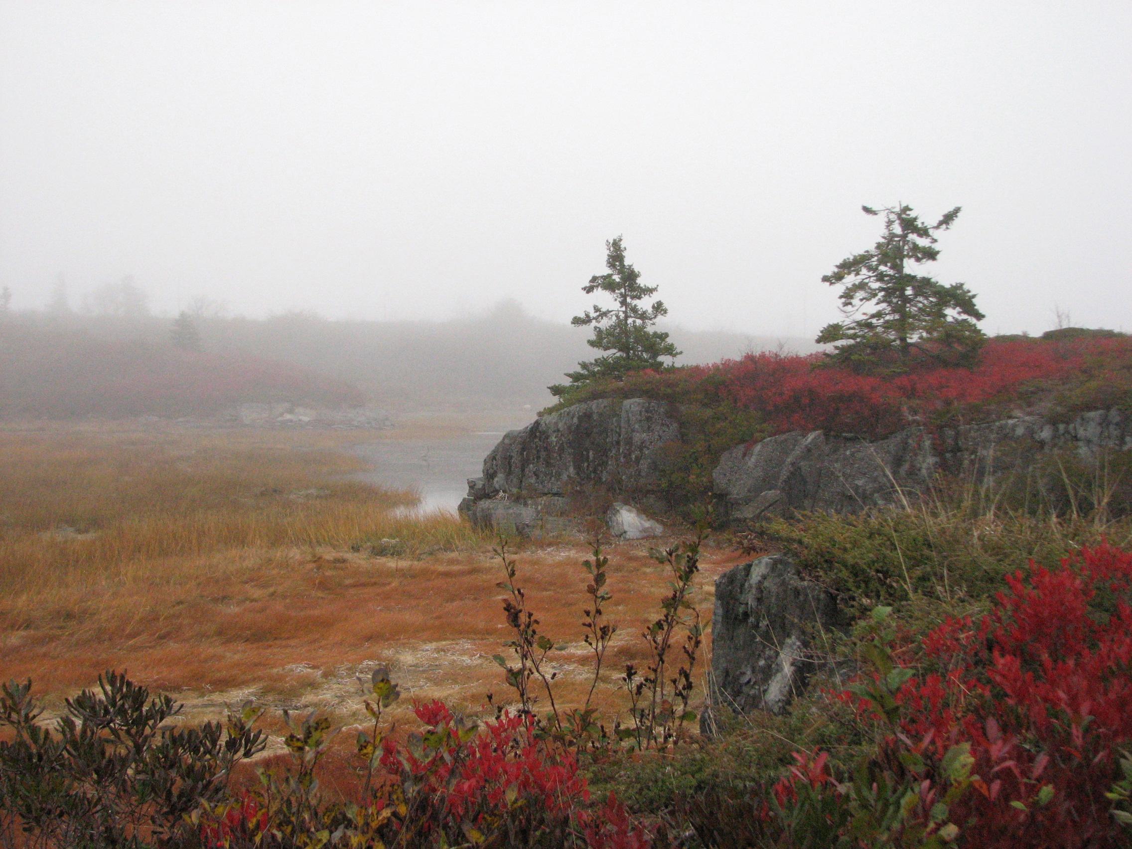 View at East Stonehurst_Nova Scotia.jpg